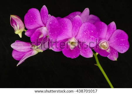 Beautiful pink orchid on black background - stock photo