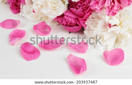 Beautiful pink peonies, isolated on white - stock photo