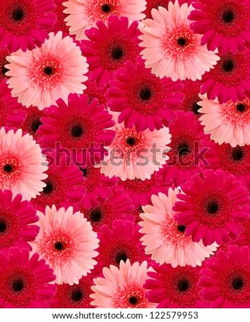 Beautiful pink - red floral background made from wild daisy - stock photo
