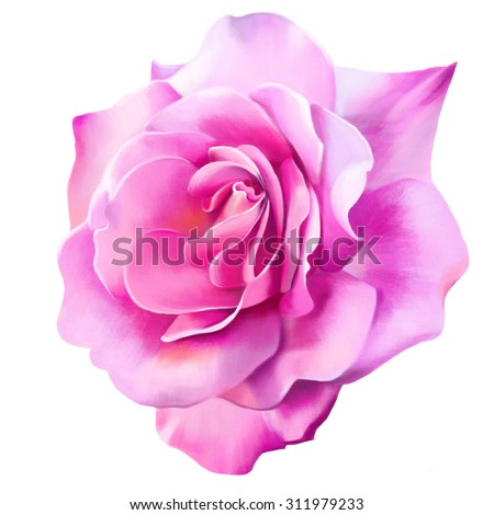 beautiful pink rose, closeup on white background, greeting card, watercolor illustration - stock photo