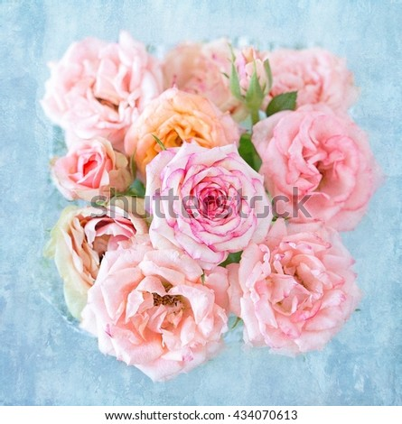 Beautiful pink rose flowers close-up.Vintage style ,grunge paper background. - stock photo