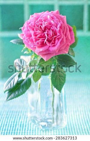 Beautiful pink rose in a vase on a green background . - stock photo