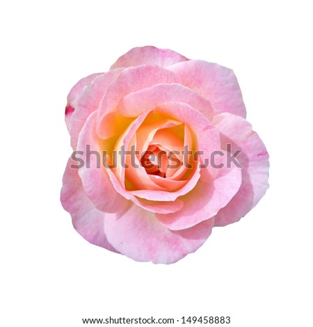 Beautiful pink rose isolated on white  - stock photo