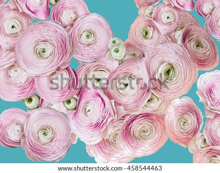 Beautiful pink roses on blue background - stock photo