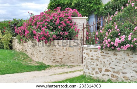 beautiful pink  roses over a stone wall - stock photo