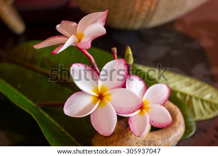 beautiful pink white flower plumeria or frangipani with green leaf and boutique vintage style decoration - stock photo