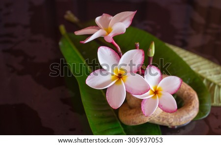 beautiful pink white flower plumeria or frangipani with green leaf and boutique vintage style decoration for spa background or relax feeling - stock photo