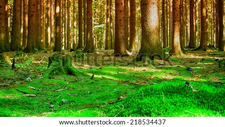 Beautiful place for relaxation. Forest with sun rays in summer time. Relax and meditation site. - stock photo