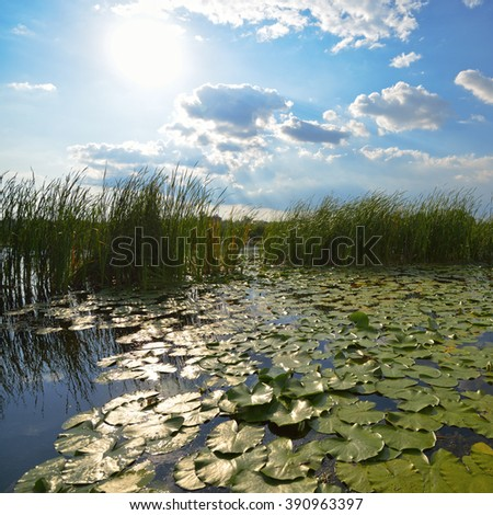 Beautiful pond with reeds and lily pads at the morning - stock photo