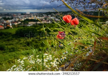 Beautiful poppy flower over city with nice vivid colors and dramatically sky - stock photo