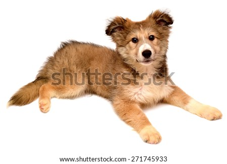 Beautiful puppy looking at the camera isolated on white background - stock photo