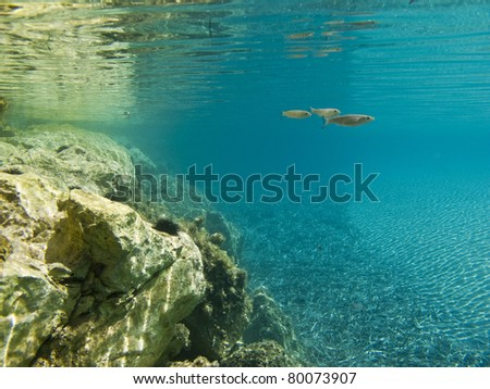 Beautiful pure underwater scene - stock photo