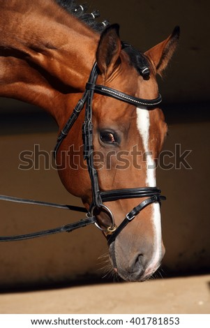 Beautiful purebred dressage horse looks at viewer from his dark stable - stock photo