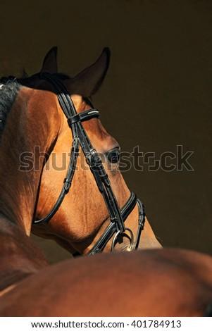 Beautiful purebred dressage horse portrait in dark stable - stock photo
