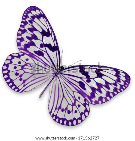 Stock vector seamless pattern of purple and pink watercolor hearts on - Beautiful Purple And White Butterfly Isolated On White