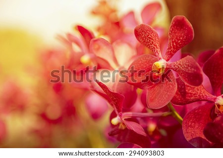 Beautiful Purple orchid flower tree with sunset tone. - stock photo