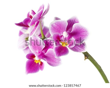 Beautiful purple orchid on white background - stock photo
