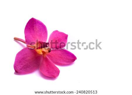 Beautiful purple orchids on white background - stock photo