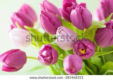 beautiful purple tulip flowers - stock photo