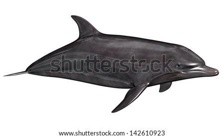 Beautiful quiet dolphin swimming in white background - stock photo