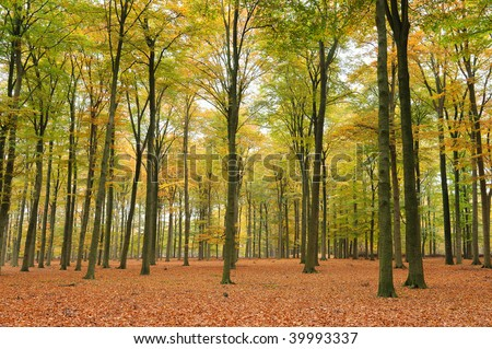 Beautiful quiet park in autumn. - stock photo