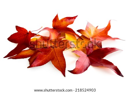 Beautiful red and gold autumn leaves lying on pure white background - stock photo