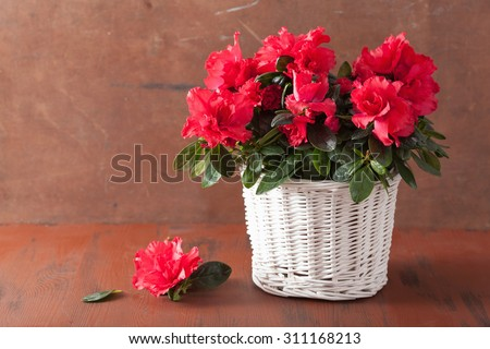 beautiful red azalea flowers in basket over rustic background - stock photo