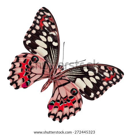 Beautiful red butterfly in fancy color profile isolated on white background, Lime butterfly in color transparency - stock photo