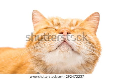 Beautiful red cat on a white background - stock photo