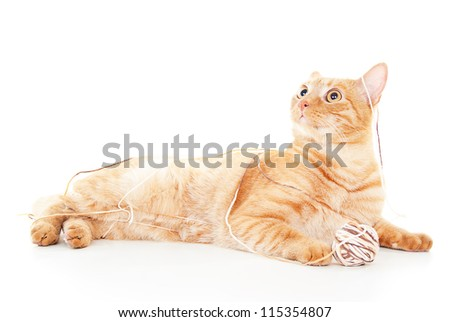 beautiful red cat playing with a ball - stock photo