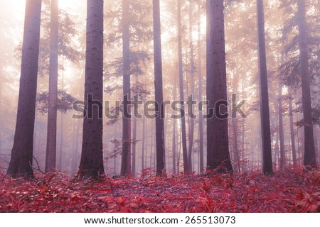 Beautiful red colored forest floor and with purple red colored foggy sunlight. Beautiful mystic light in woodland. Lovely big trees in magic forest. Color filter effect used.  - stock photo