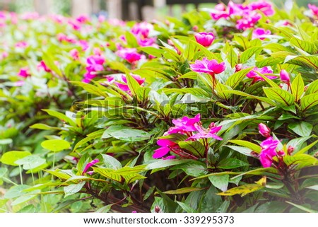 Beautiful red flower at Mae Fah Luang Garden,locate on Doi Tung,Thailand - stock photo
