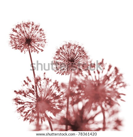 Beautiful Red Flowers / abstract  composition on white background - stock photo