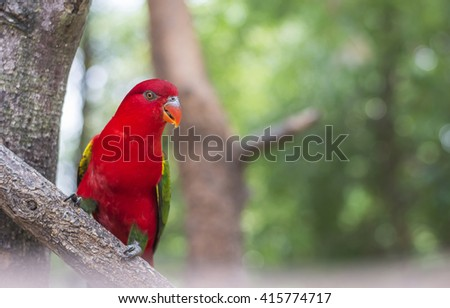 Beautiful red Parrot in forest - stock photo