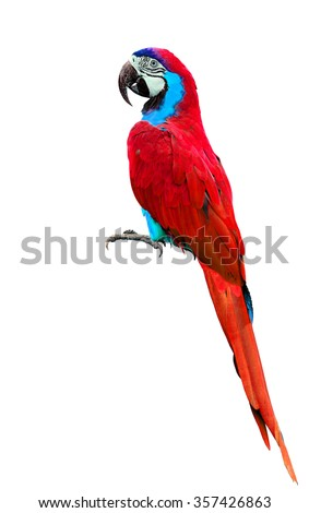 Beautiful red parrot or red parakeet isolated on white background - stock photo