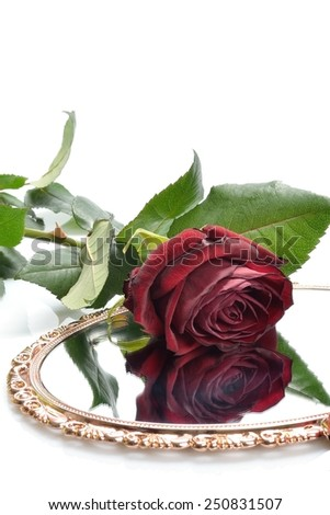 Beautiful red rose maroon flower and is reflected in the gilded mirror - stock photo