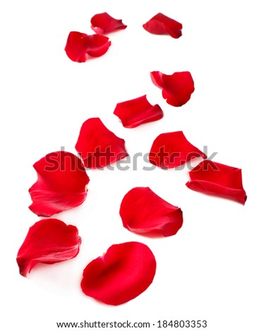 Beautiful red rose petals, isolated on white - stock photo