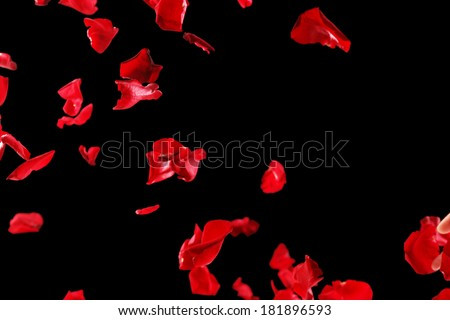 Beautiful red rose petals, on black background - stock photo