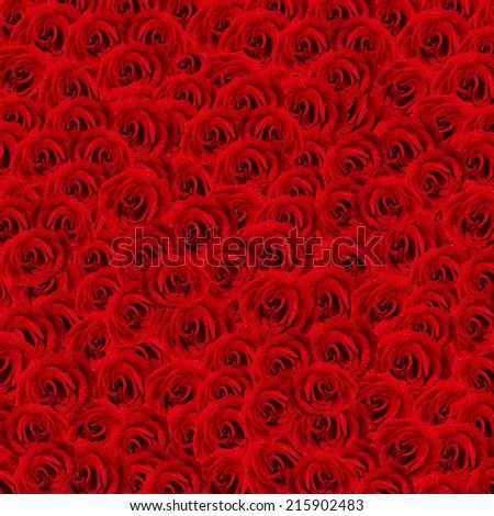 Beautiful red roses close-up - stock photo