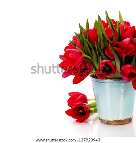 beautiful red tulips  isolated on white background - stock photo