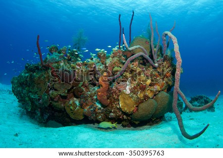 Beautiful Reef Scape - stock photo
