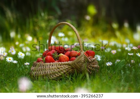 Beautiful ripe strawberries in a basket on a floral lawn sunny day. - stock photo