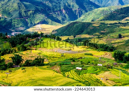 Beautiful ripen rice terraced fields brightened up in the afternoon vivid sun lights.  Location: Y Ty, Lao Cai province, Vietnam. - stock photo