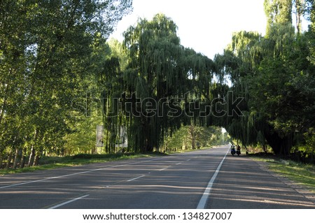 Beautiful road in Argentina with a natural tree bridge - stock photo