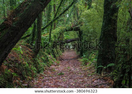 Beautiful romantic old avenue of trees in mystical green forest / park / garden with spooky trees and fallen trees covered with moss. - stock photo