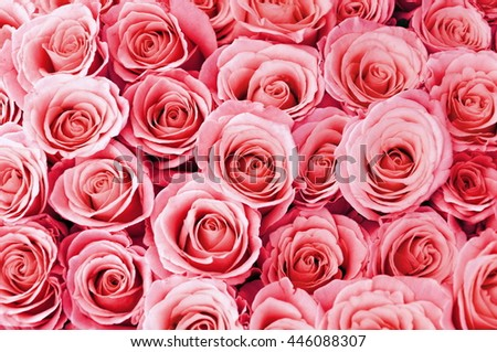 Beautiful  rose background,Vintage roses,soft focus - stock photo