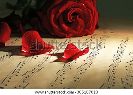 Beautiful rose petals on music sheets, closeup - stock photo