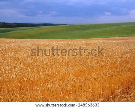 Beautiful rural landscape - stock photo
