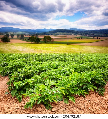 Beautiful rural landscape with potato field in foreground, Black Forest, Germany - stock photo