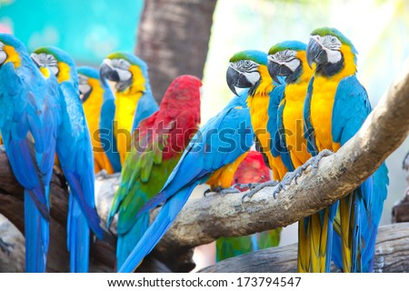 beautiful Scarlet macaw - stock photo